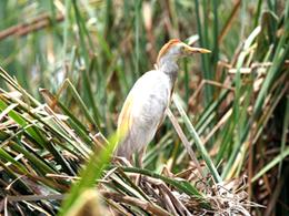 Observación de aves en Laguna Yarinacocha