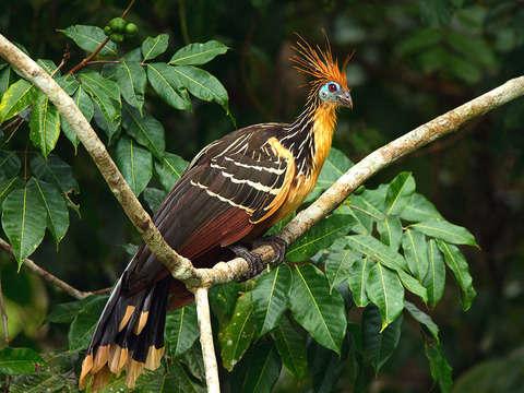 Iquitos 4d/3n: Albergue Natural, Alimentación y Excursiones