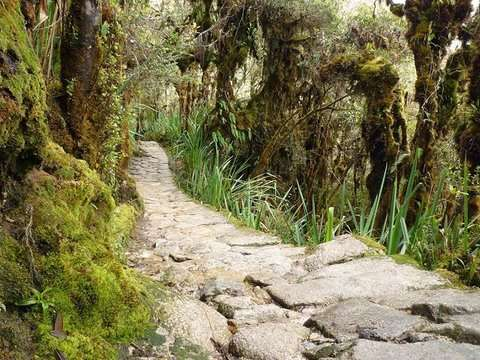 4d/3n Inka Jungle a Machu Picchu - Solo Nacional