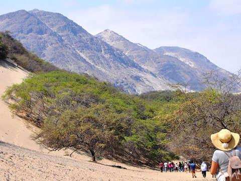 Full Day: San Pedro de Lloc y el Bosque de Algarrobos