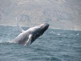 Observación de Ballenas en la Costa Norte