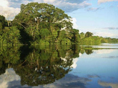Excursión a la Reserva Nacional de Pacaya Samiria (4d/3n)